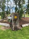 Elements from the 'Happy Tree' in the nature playspace